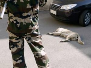 Romania è legge lo sterminio dei cani randagi!