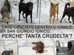 cane-lanciato-dentro-il-canile-di-san-giorgio-ionico-perche-tanta-crudelta