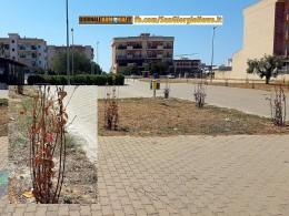parco-degli-allori-pprecisazioni-dell-assessore-bucci-in-tema-di-manutenzione-del-verde-in-spazi-pubblici
